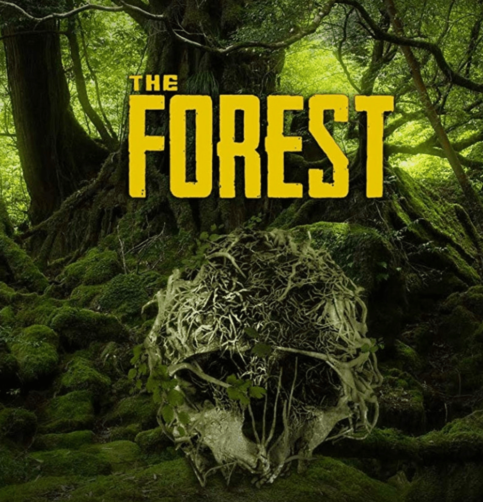 the forest cover photo