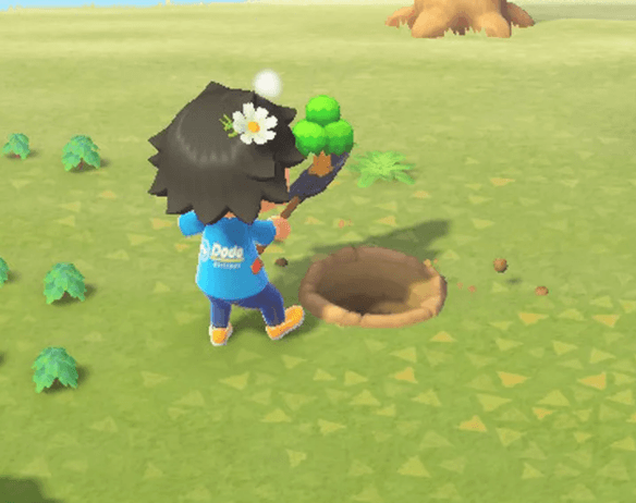 replanting a tree